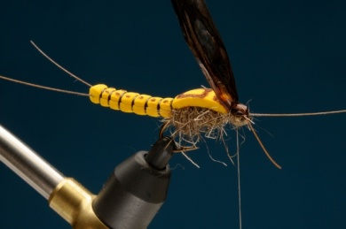 Fly tying - Adult Stone - Step 7