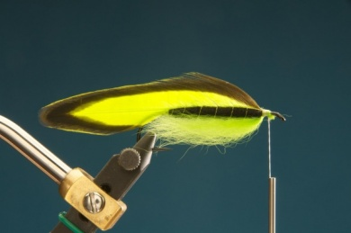 Fly tying - F & H Matuka - Step 6