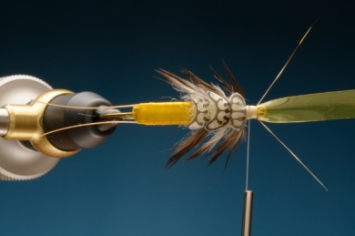 Fly tying - Stonebou - Step 8