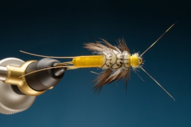 Fly tying - Stonebou - Step 9