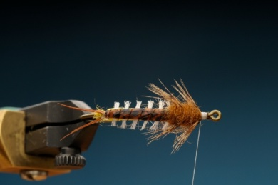 Fly tying - Gilled Chiloporter - Step 10