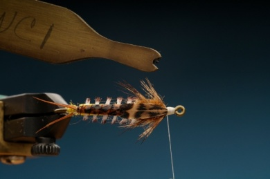 Fly tying - Gilled Chiloporter - Step 11