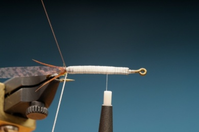 Fly tying - Gilled Chiloporter - Step 3