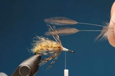 Fly tying - M.M. Translucent Pupa - Step 7