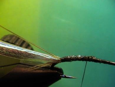 Fly tying - Rhyacophila Emerger - Step 2
