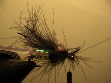Fly tying - Rhyacophila Emerger - Step 5
