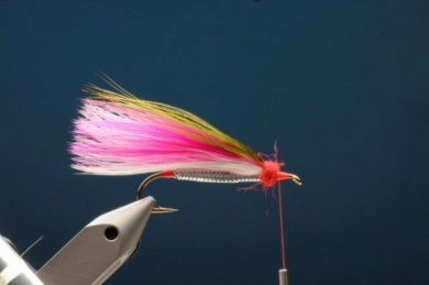 Fly tying - M.M. Rainbow Muddler - Step 7