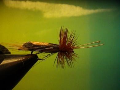 Fly tying - R.T.-Sedge - Step 5