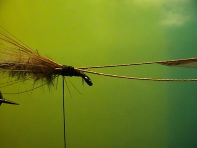 Fly tying - R.T.-Sedge - Step 3