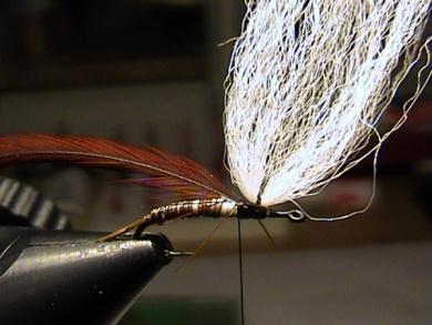 Fly tying - Bachflohkrebs - Step 5
