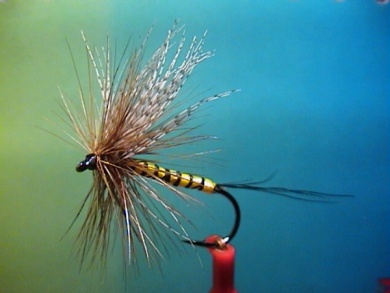Fly tying - Band-Maifliege - Step 7