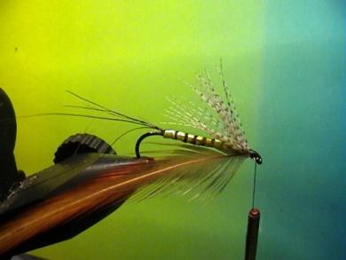Fly tying - Band-Maifliege - Step 6