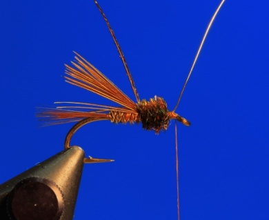 Fly tying - Pheasant Tail - Step 6
