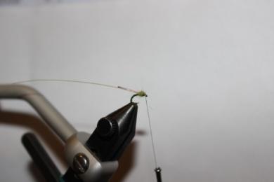 "Fly tying - The ""Mountain Dew Midge"" - Step 6"
