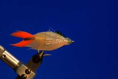 Fly tying - M.M. Silver Mojarra - Step 8