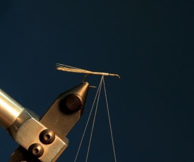 Fly tying - CDC DUN - Step 2