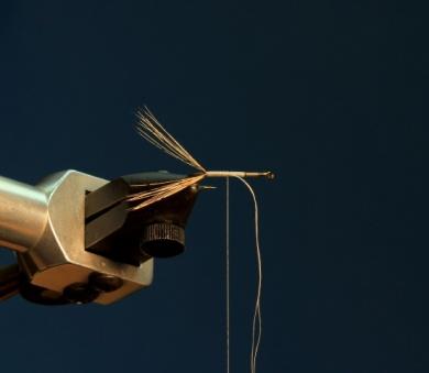 Fly tying - CDC DUN - Step 3