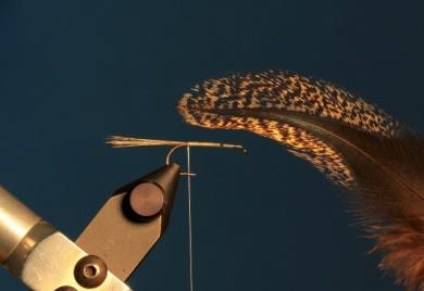 Fly tying - CDC DUN - Step 1