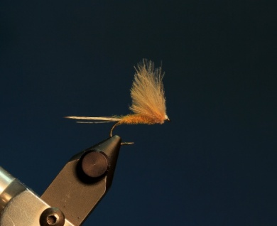 Fly tying - CDC DUN - Step 11