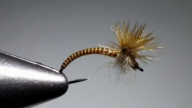 Fly tying - Light Cahill emerger. - Step 1