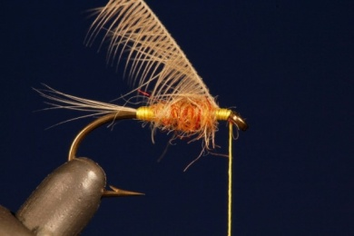 Fly tying - Tup's Indispensable - Step 4