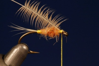 Fly tying - Tup's Indispensable - Step 3