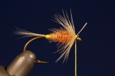 Fly tying - Tup's Indispensable - Step 5