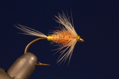 Fly tying - Tup's Indispensable - Step 6