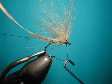 Fly tying - May fly female Mallard & CDC - Step 9