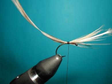Fly tying - May fly female Mallard & CDC - Step 3