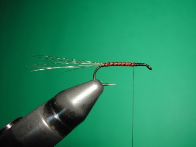 Fly tying - Paraloop with wings - Step 4