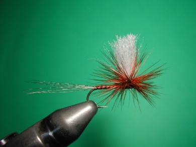 Fly tying - Paraloop with wings - Step 17