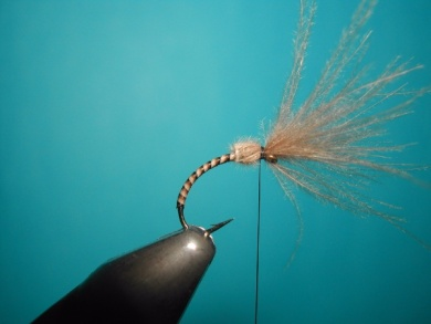 Fly tying - Valtellina spider - Step 4