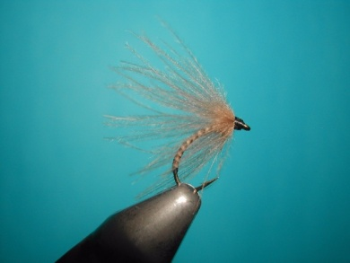 Fly tying - Valtellina spider - Step 9
