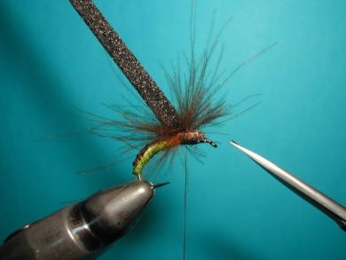 Fly tying - Caddis emerger - Step 9