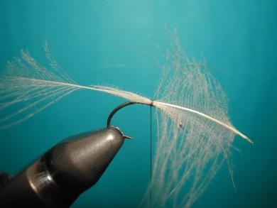 Fly tying - Caddis emerger CDC body. - Step 1