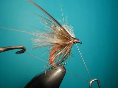 Fly tying - Caddis emerger CDC body. - Step 15