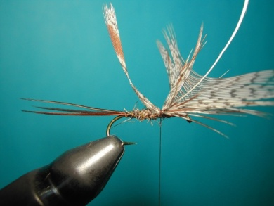 Fly tying - March Brown Self Split Wings - Step 6