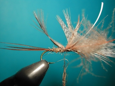 Fly tying - March Brown Self Split Wings - Step 7