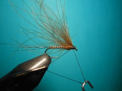 Fly tying - Self Split hackle fly - Step 6