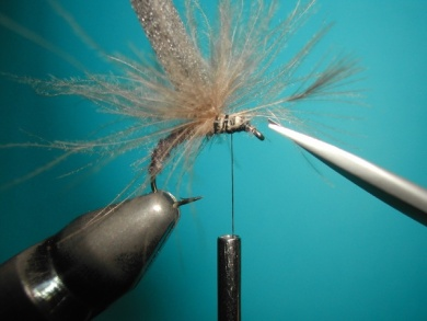 Fly tying - Upset hackle. - Step 5