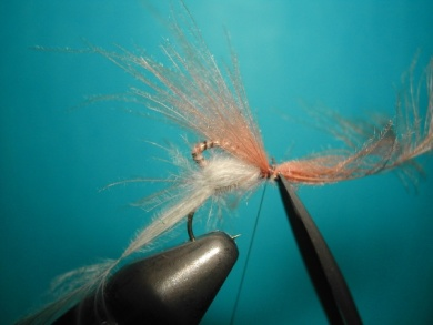 Fly tying - Cripple - Step 14