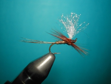 Fly tying - Hackle oriented forward to 45° - Step 11