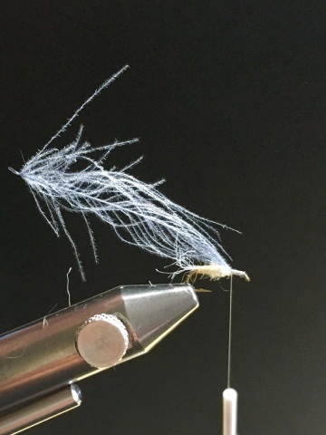 Fly tying - Ghost Loopwing Emerger ( PMD/Sulpher ) - Step 5