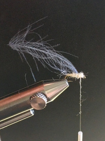 Fly tying - Ghost Loopwing Emerger ( PMD/Sulpher ) - Step 6