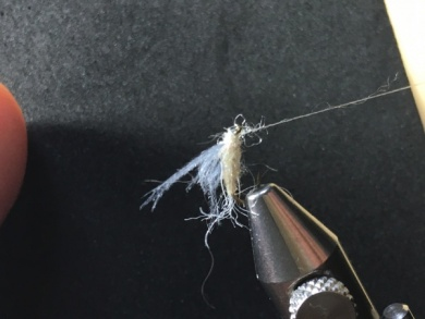 Fly tying - Ghost Loopwing Emerger ( PMD/Sulpher ) - Step 9