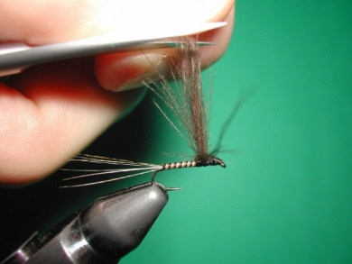 Fly tying -  CDC May fly Spent - Step 10