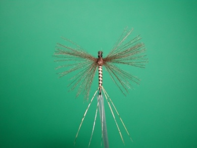 Fly tying -  CDC May fly Spent - Step 11
