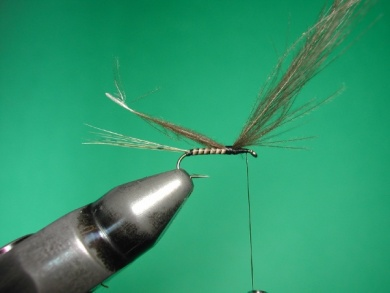 Fly tying -  CDC May fly Spent - Step 3