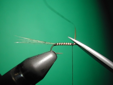 Fly tying -  CDC May fly Spent - Step 2